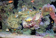 """Musée et Institut océanographique de Monaco """"Tropisches Aquarium"""""""