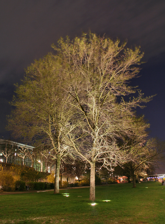 Museumsufer-Bäume
