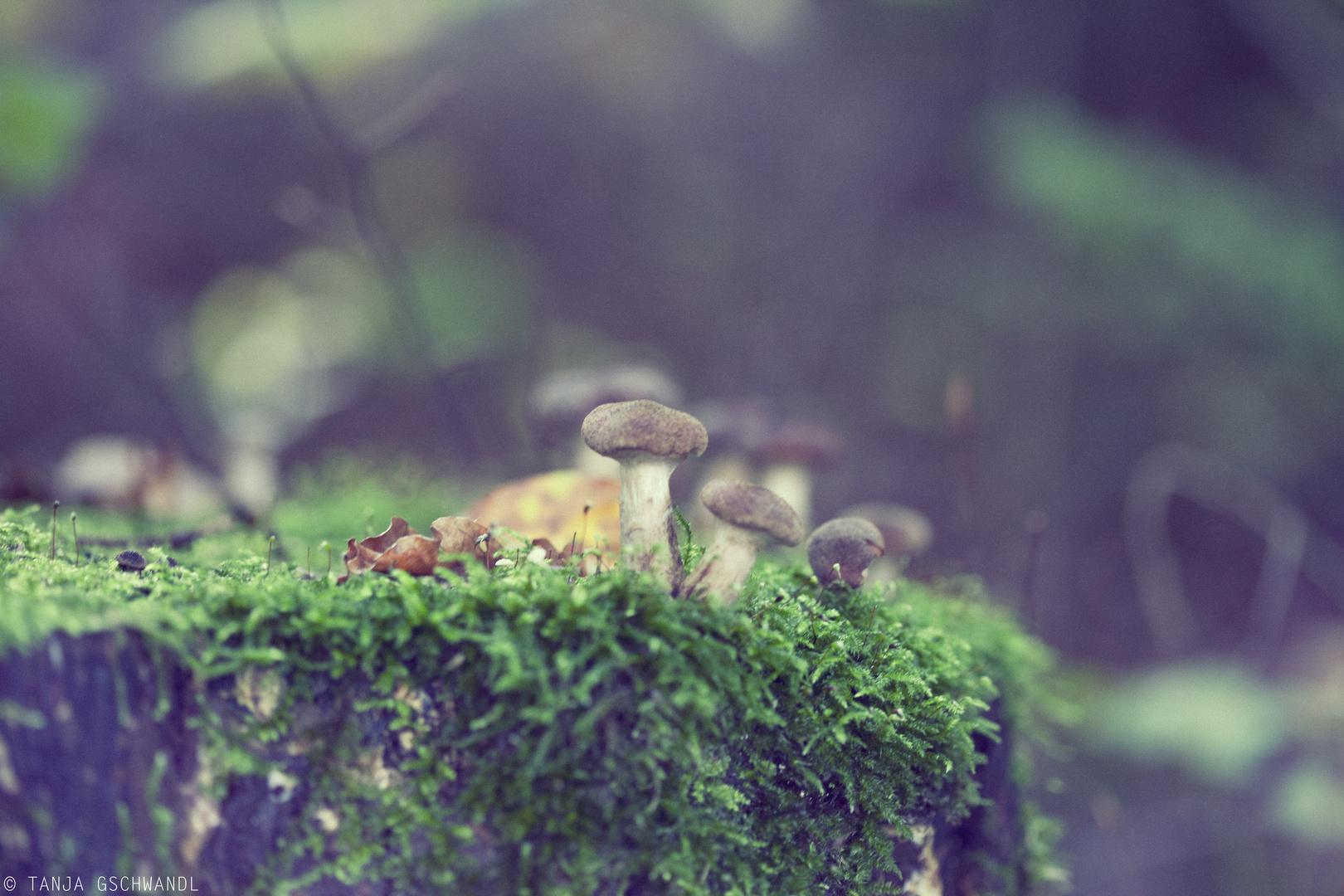 *Mushroom*