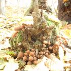 mushroom family 2