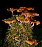 Mushroom high-rise