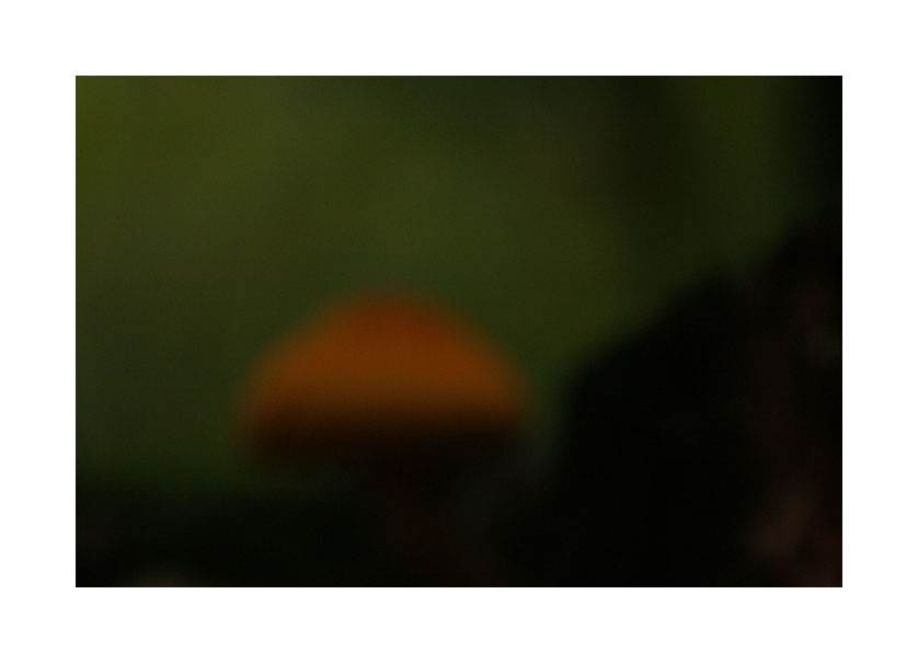 Mushroom through a veil