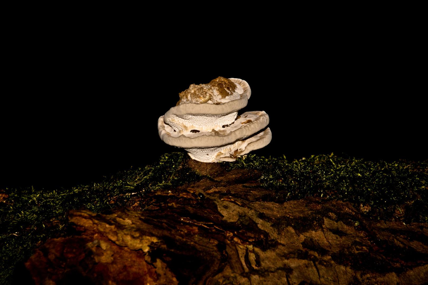 Mushroom-Tower