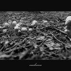 mushrooms or ...