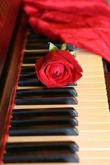 Musica e fiori...