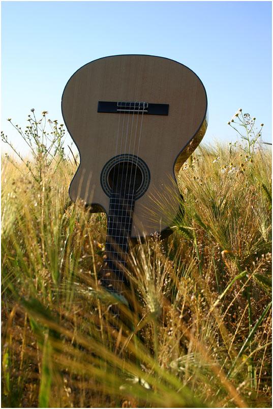 music'n'nature pt. 1