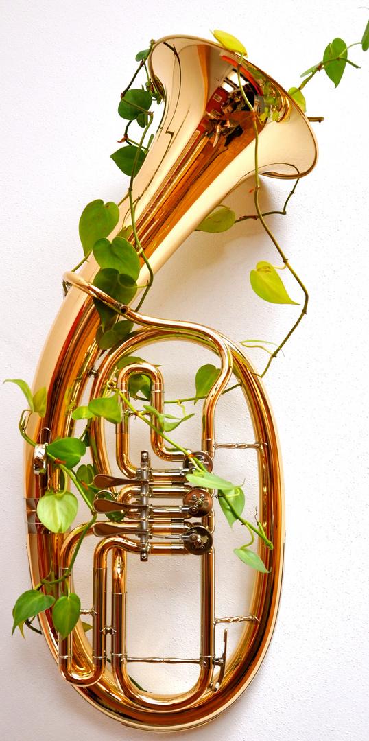 Musik die wächst