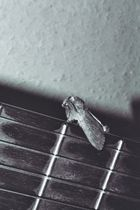 musikalische Motte