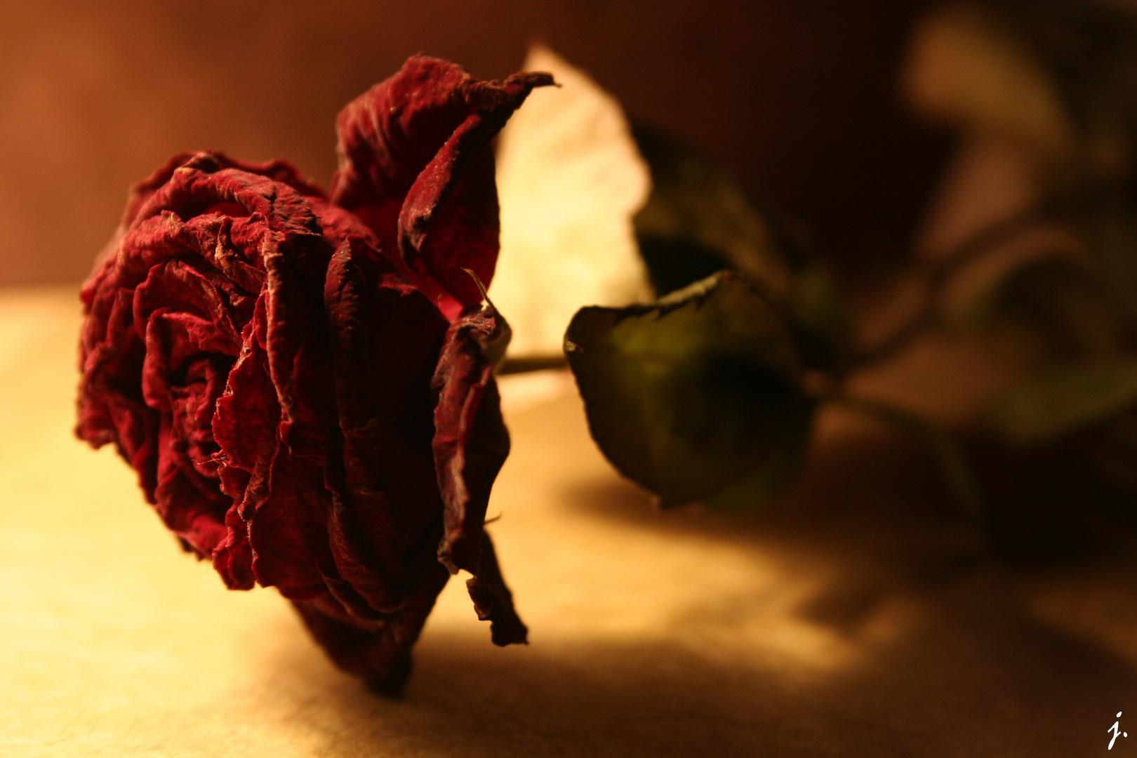 musique : Roses de Outkast