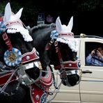 Muss das sein? Dass affig geschmückte Pferde schwere Wagen durch Lärm und Abgase ziehen?