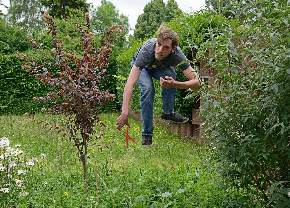 Muss der Rasen wirklich gemäht werden?