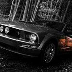 Mustang 2007