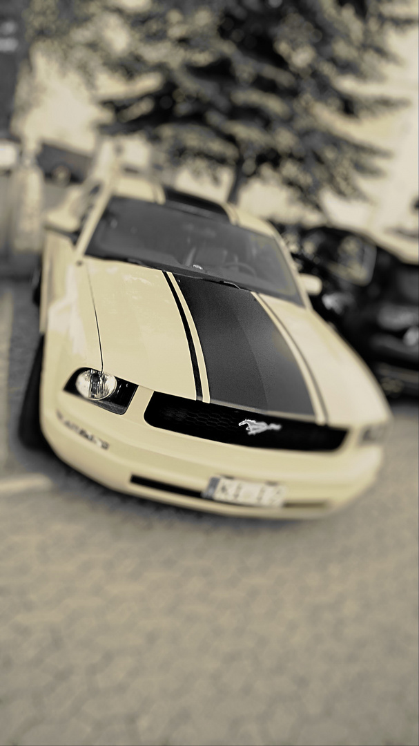 Mustang in old style