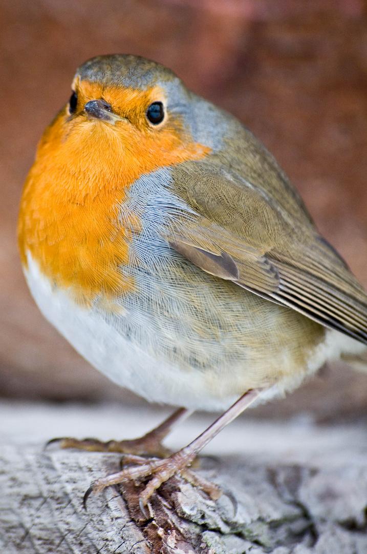 Mutiges Vögelchen
