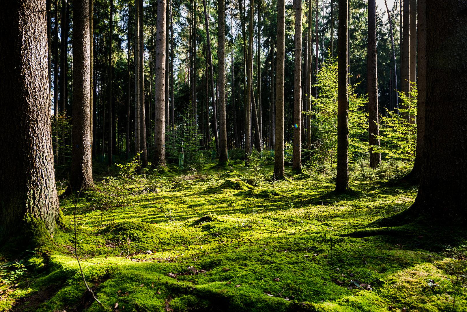 Mutschach Wald - Dinkelsbühl