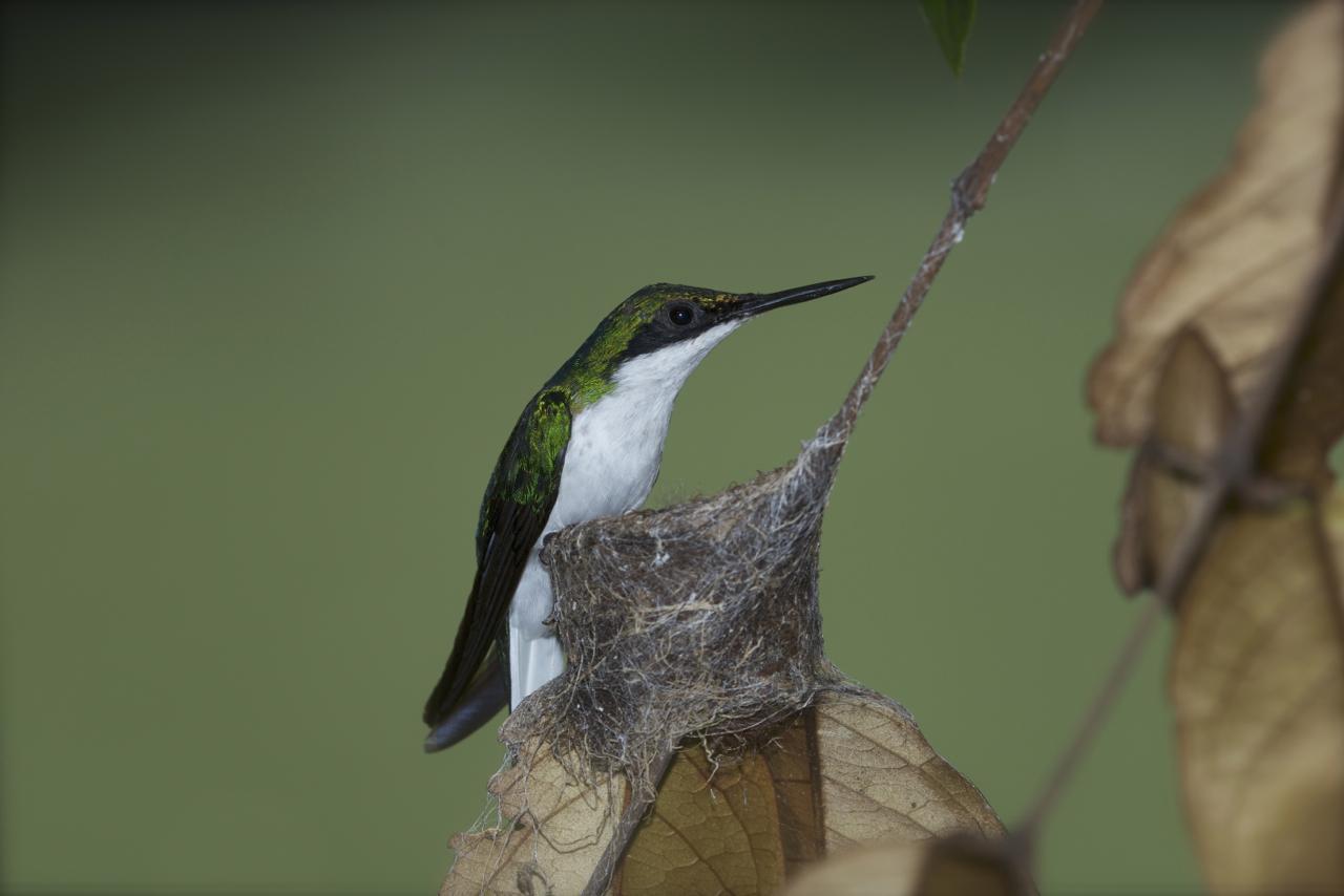 Mutter Kolibr