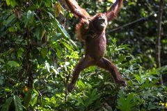 Mutter mit Kind auf Borneo