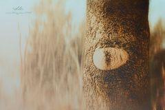 Mutter Naturs Auge