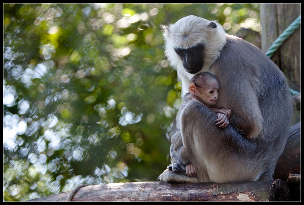 Mutter-Schutz
