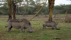 Mutter-Tochter-Nashorn, Kenia