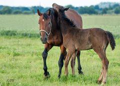 Mutter und Fohlen