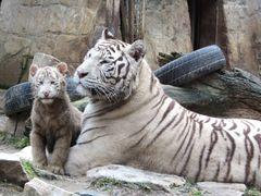 Mutter und Tochter II
