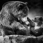 Mutterbär mit Kind