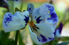 Mutterblümchen