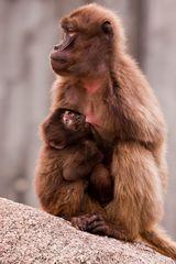 Mutterliebe 2