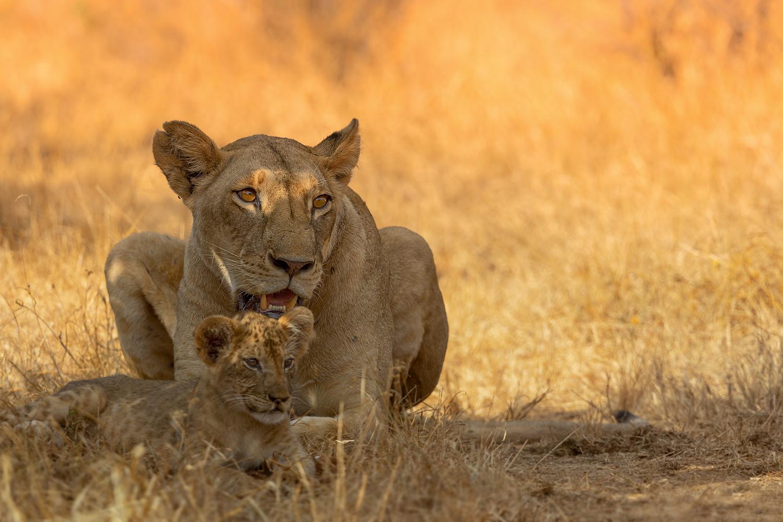 « Mutterliebe »