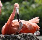 Mutterliebe bei Flamingos