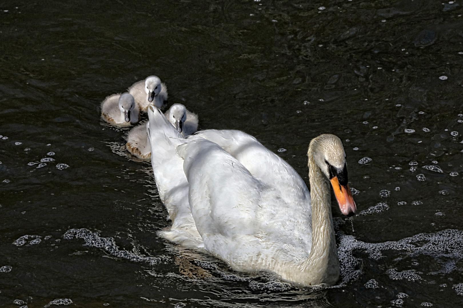 Muttertag :-)