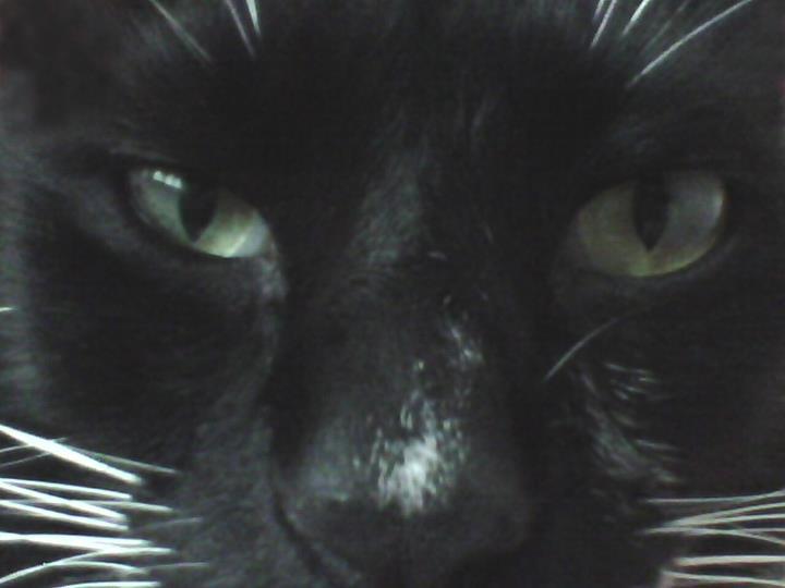 my bb cat