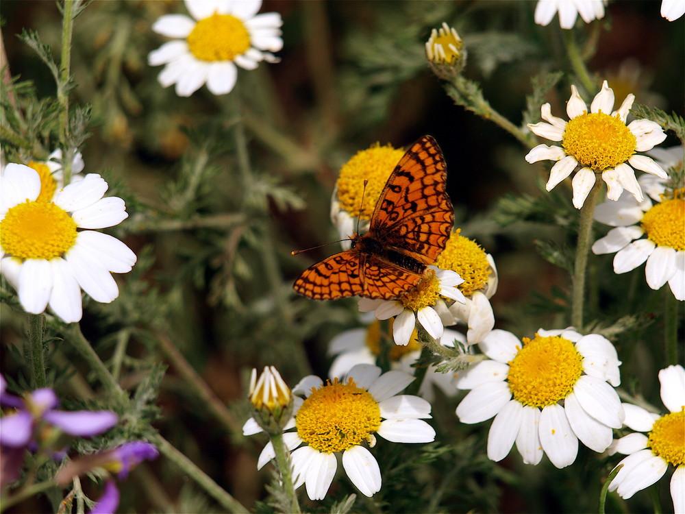My beautiful mariposa