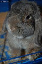 My bunny :)