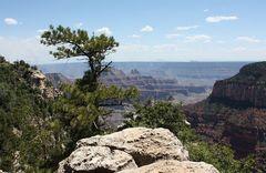 """My """"Canyon Tree""""..."""
