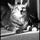My Cat...