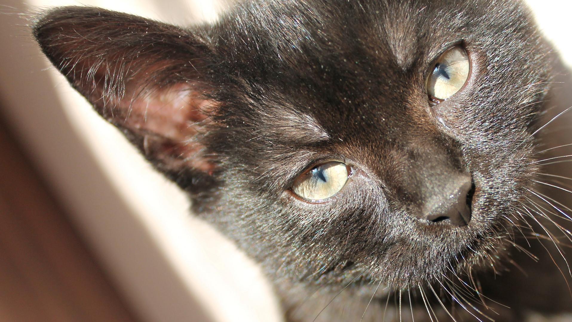 my cat - emy. :-)