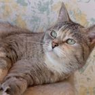 My cat, Klonkay