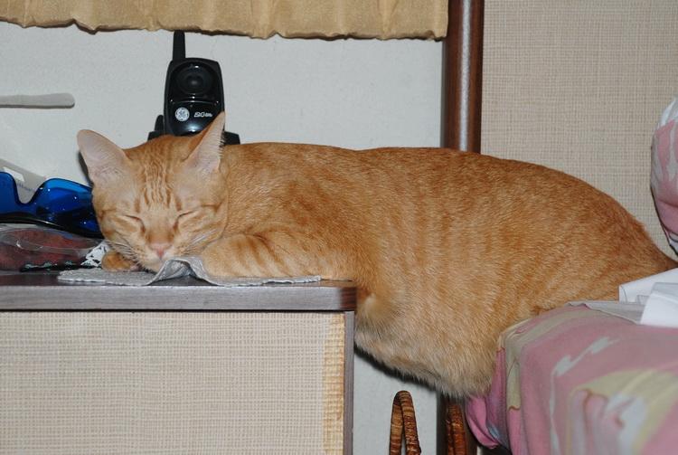 My cat likes Planking .
