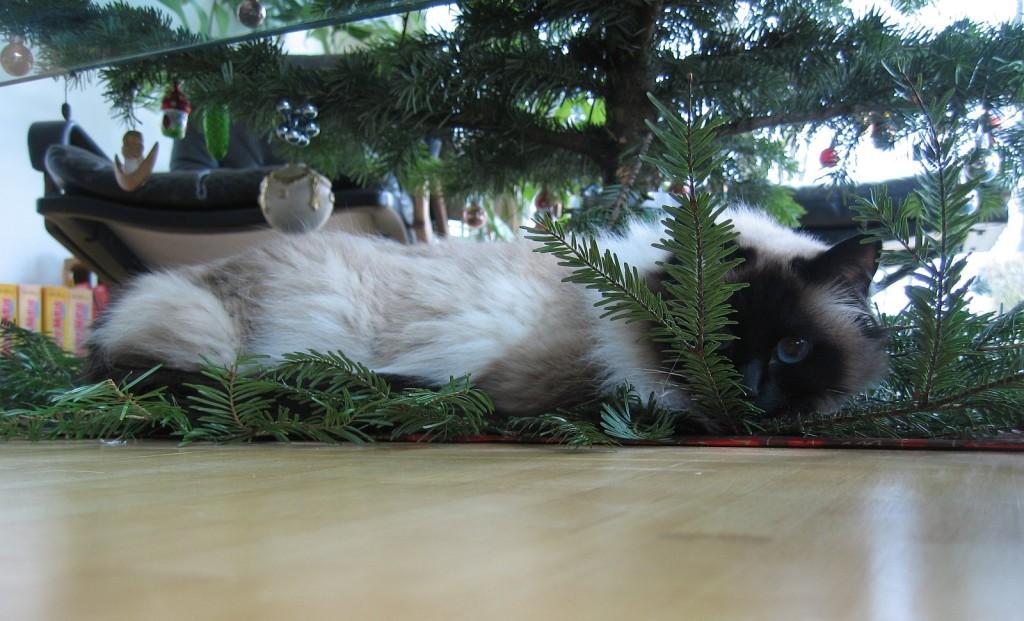 My Cat under the X-Mas Tree