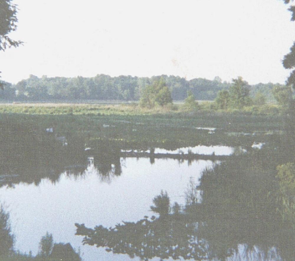 my dad's creek