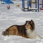 My dog Basil.