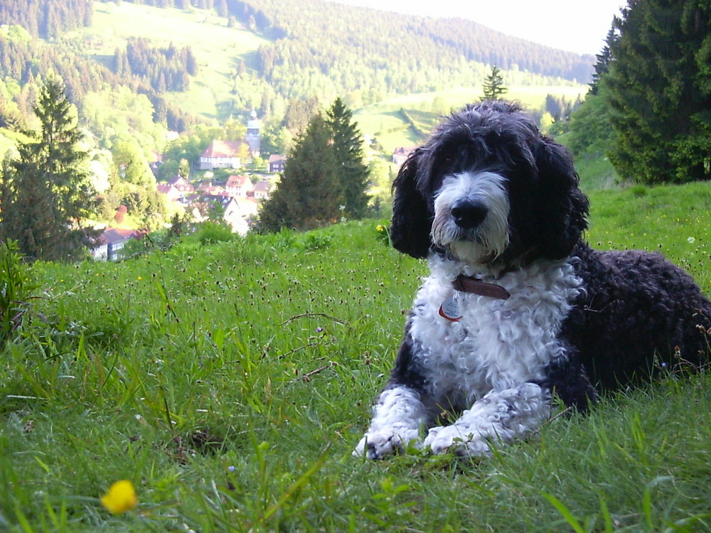 """My dog in the mountain"""" Harz """""""