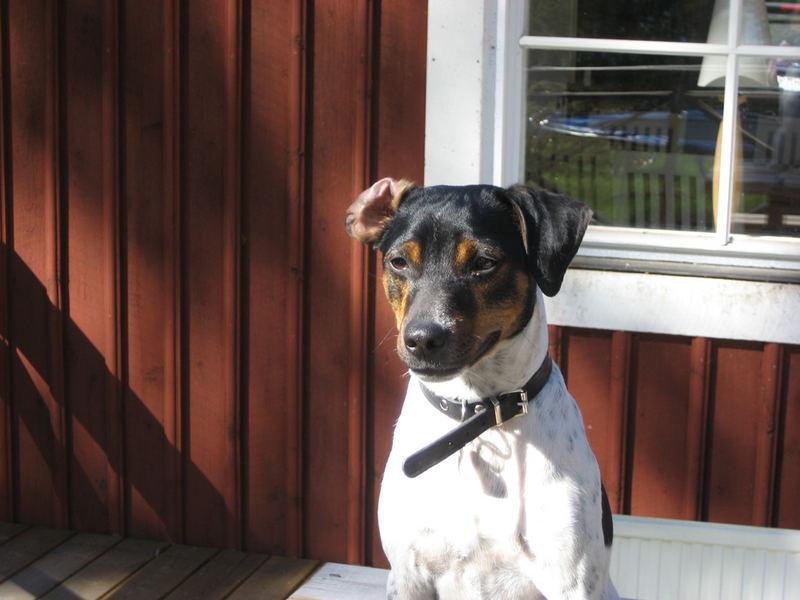 "My Dog ""Torsten"""