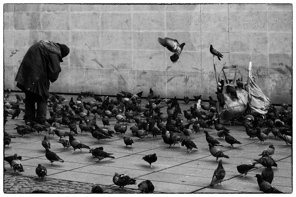 """My Family of Doves..."""