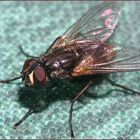 -my first fly-