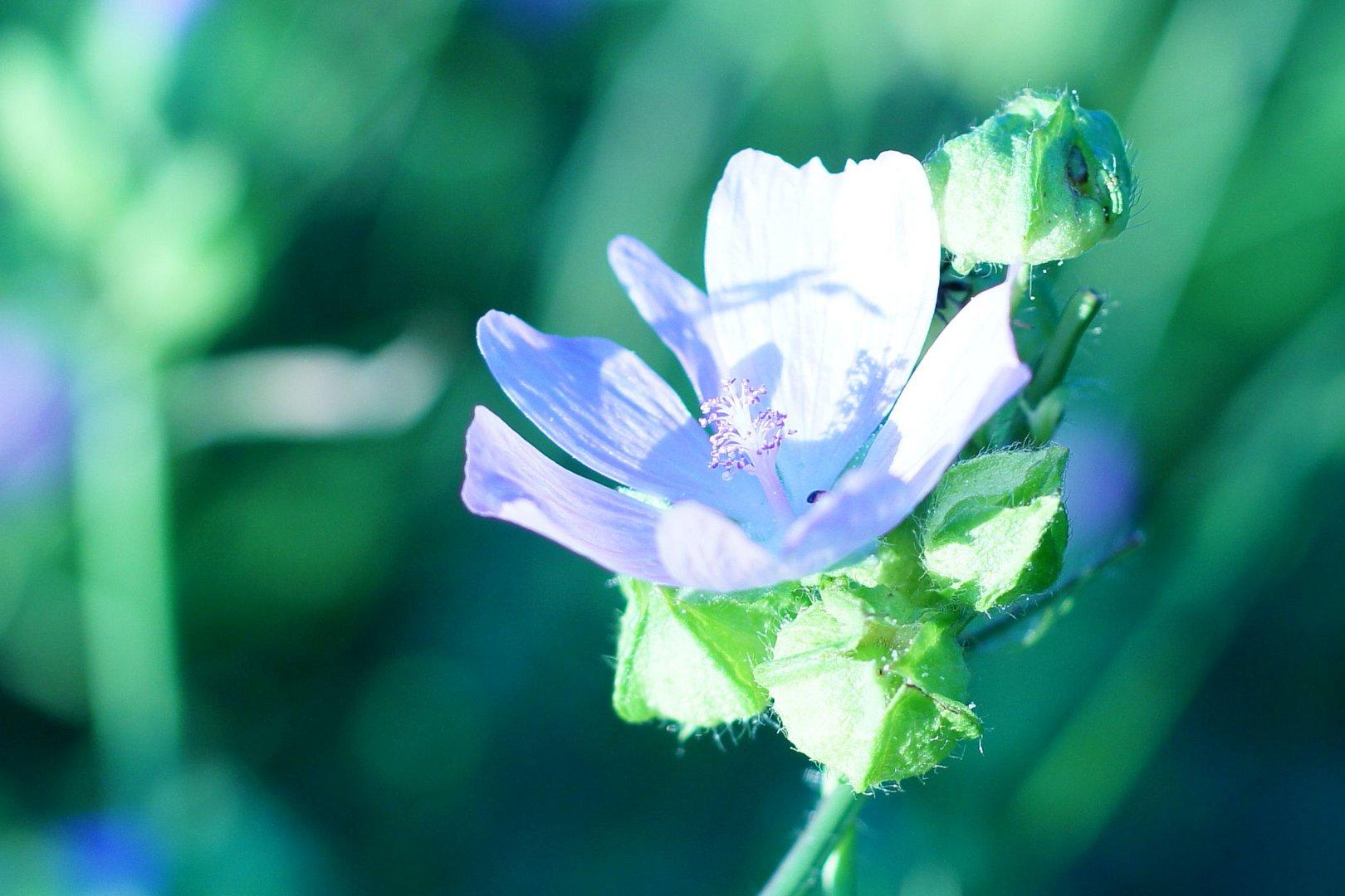 my firts flower