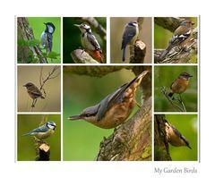My garden birds