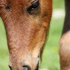 My horse^^